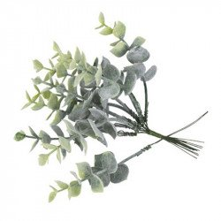 Branches d'eucalyptus blanchi (x10)