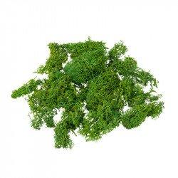 Mousse naturelle haute qualité - 50g